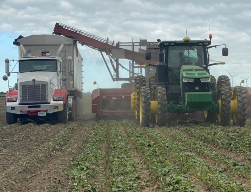 Michigan Sugar Company begins 2020-2021 sugarbeet slicing campaign